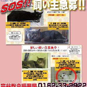 最北端 宗谷総合振興局からの猫のSOS!!