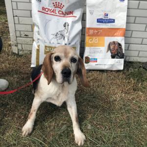 ご支援いただけたら幸いです! 犬用phコントロール、c/dケアのご支援お願いします<(__)>