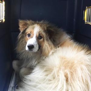 6/18北見保健所から犬3頭を引き取りました!