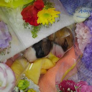 ハートフルの子犬が2頭亡くなりました・・・