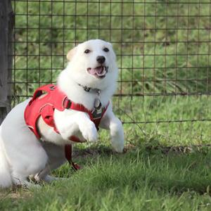 卒業犬のタオちゃん(旧:ムース)が遊びに来てくれました♪