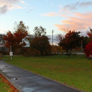 10月23日(金)の札幌市動物管理センター福移支所と今週の道内保健所情報
