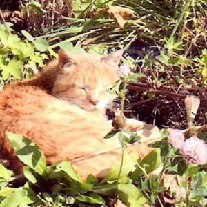 基金猫の飼い主募集猫 追加しました🐈