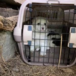 11/25 滝上町から子犬2頭を保護しました!