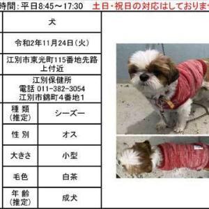 江別保健所から迷子のシーズーのお知らせ