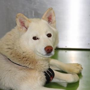 1月15日(金)の札幌市動物管理センター福移支所と今週の道内保健所情報