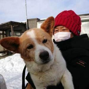 仁(じん)が預かりボランティアさんのお宅に行きました☆