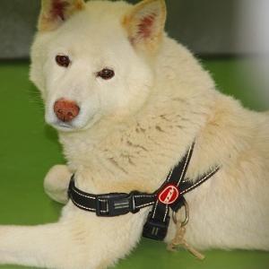 5月28日(金)の札幌市動物管理センター福移支所と今週の道内保健所情報