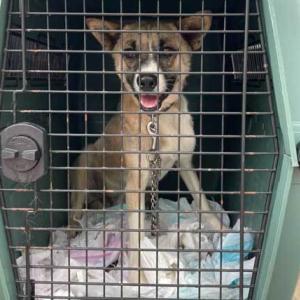 本日6月17日、釧路保健所からオスの野犬を引き取りました!