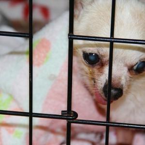 6月18日(金)の札幌市動物管理センター福移支所と今週の道内保健所情報