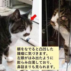 SOS!!岩見沢保健所に収容中の負傷猫