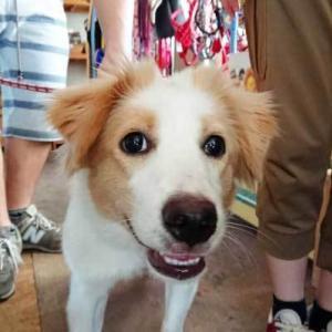 卒業犬、まりねちゃん(旧マリネ)が遊びに来てくれました〓