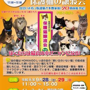 今日明日 9/28.29 「飼い主のいない猫基金」保護猫譲渡会開催♪