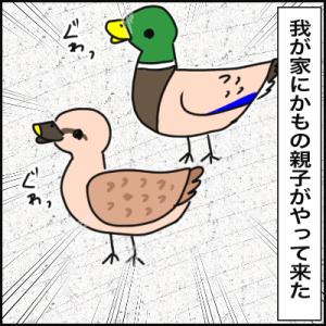 絵日記 鴨の季節