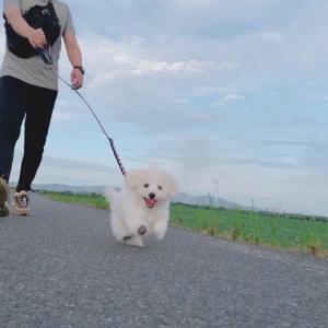 初お散歩で不思議体験