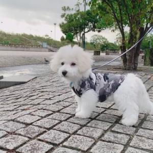 ロックスター犬