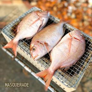 【ニッキ】鯛の塩焼き