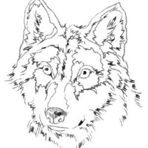 【イラスト】狼グシオン