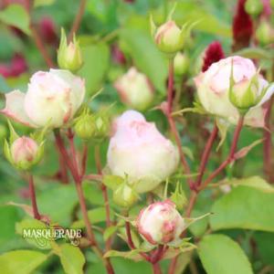 【ニッキ】雨の日の花