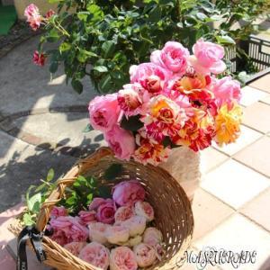 【ニッキ】今日の薔薇
