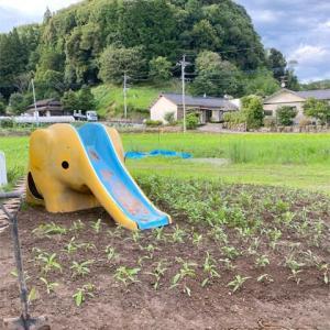 【ニッキ】庭と日常