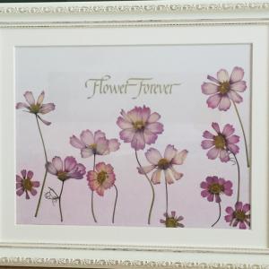 Flower Forever〜押し花額 コスモス〜