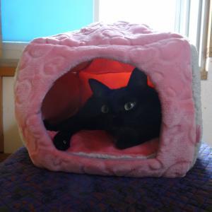 黒猫のたこぴー 20