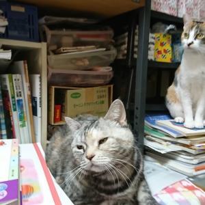 猫ブログが難しい訳