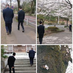 コロナ22 最後の桜? 大学入学と中学入学前に撮影に行きました
