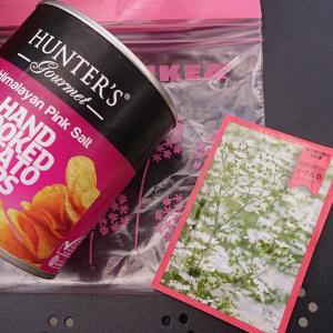 ハンターポテトチップスの缶にかすみ草を植える ヒマラヤソルト イケア インスタ映え 昭和記念公園