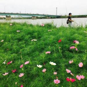 釣り大会へ向けて~おひさしぶりの遠賀川でした。7