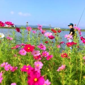 本日の釣果 in遠賀川