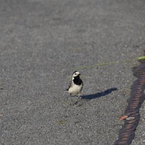 ヒツジだけではなくて、小鳥もいました