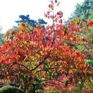 紅葉の植物公園