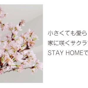 【769】サクラ