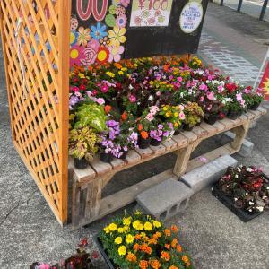 大人気綺麗なお花〜相模原・町田の水まわり・外壁屋根リフォーム専門店 リプラス