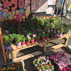 秋らしいお花入荷〜相模原・町田の水まわり・外壁屋根リフォーム専門店 リプラス