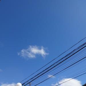 久しぶりの青空~♪