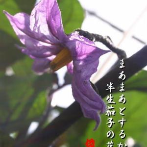 茄子の花、胡瓜食む、汗光る