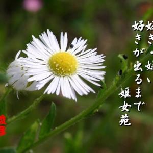姫女苑、オリヅルラン、花藻