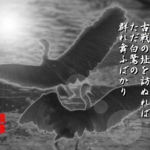 写真短歌(白鷺、睡蓮の池)