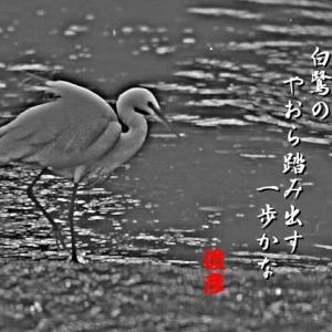 白鷺、睡蓮