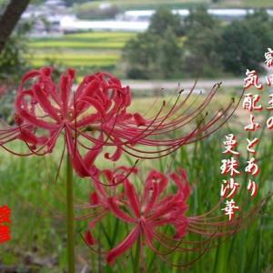 明日香村(その3)、秋興