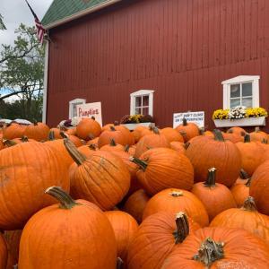 ★Apple cider Mill ミシガンリンゴ祭りの秋★