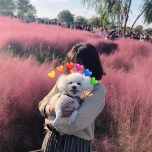 SNS人気のピンクミューリーを見にハヌル公園に行ってきた