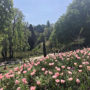 春のパリでピクニック