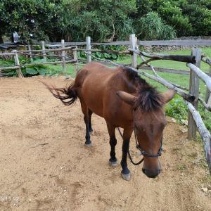 与那国 乗馬クラブUBUNTUで乗馬体験