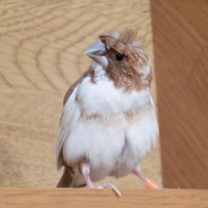 階段での放鳥