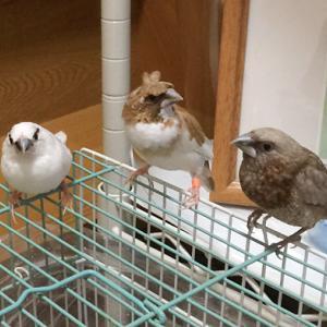 鳥カゴをまる洗い