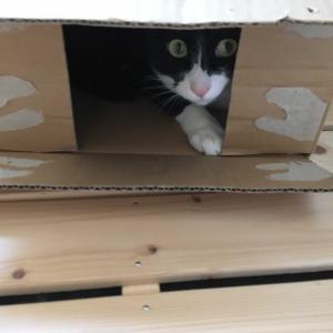 ネコが来た(^^♪ ㊿+2?